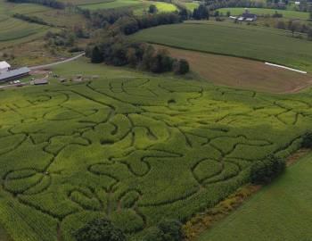 Corn Maze at Deep Creek