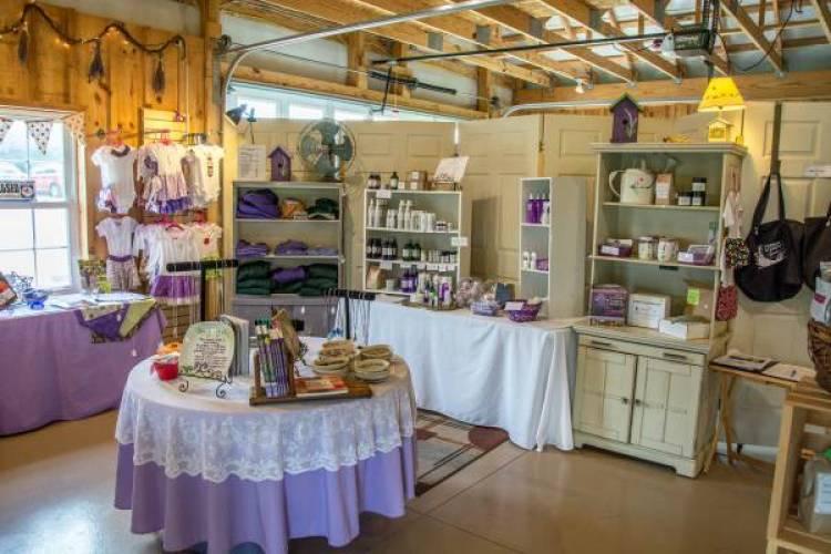Shopping at Deep Creek Lavender Farm