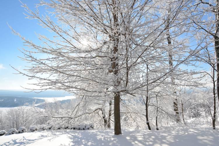 Snowy Trees at Deep Creek Lake