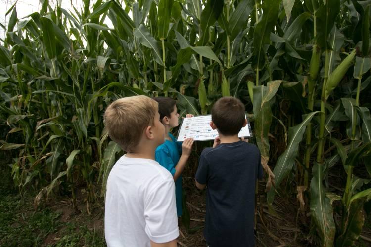 Corn maze near Deep Creek Lake