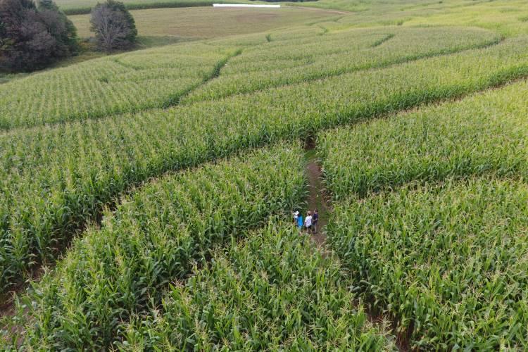 Kids in Corn Maze at Deep Creek Lake