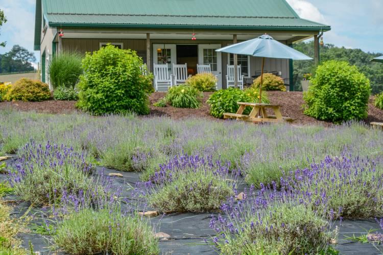 Lavender Farm at Deep Creek Lake