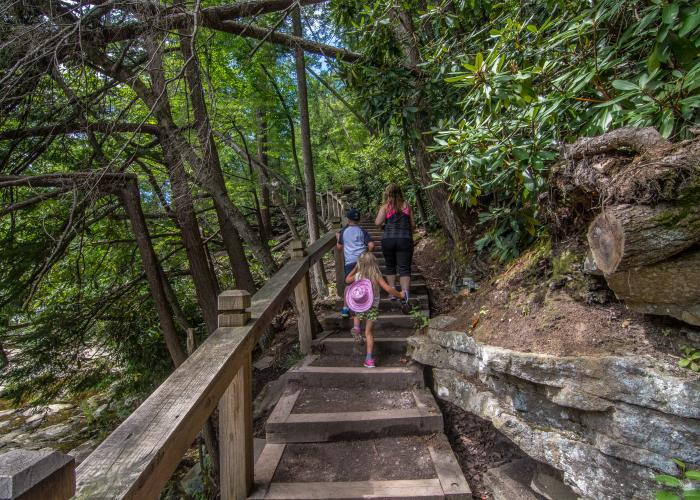 Walking Path at Swallow Falls State Park